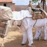 beekeeping_donkey.jpg.492x0_q85_crop-smart