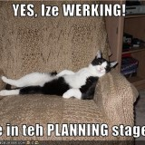 procrastination_lolcat