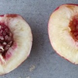 Jujube And Goji Fever Root Simple