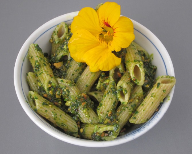 nasturtium flower pesto