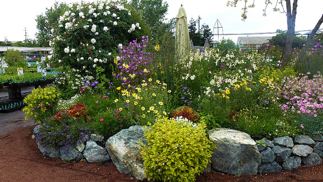 Entrance display. Photo: Annie's Annuals and Perennials.