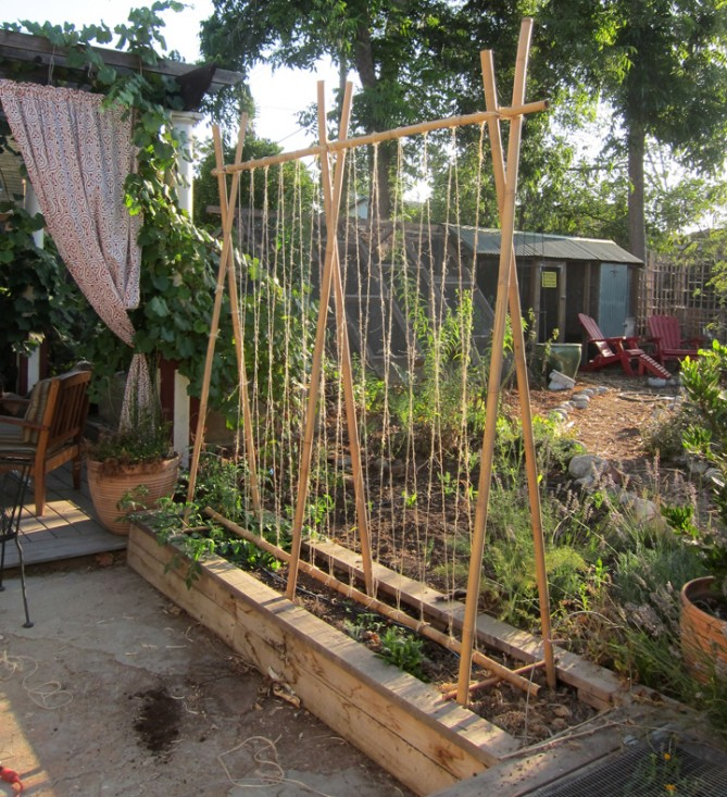 Gallery For Vertical Vegetable Garden Trellis