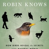 What-the-Robin-Knows