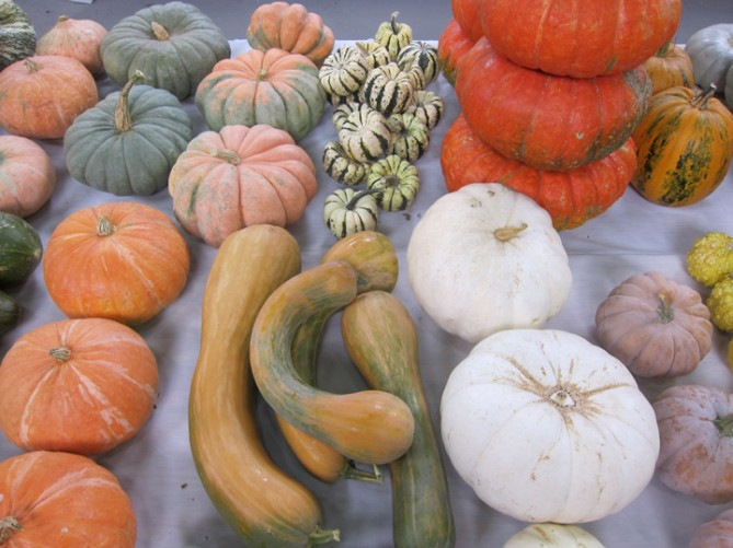 squash at National Heirloom Exposition
