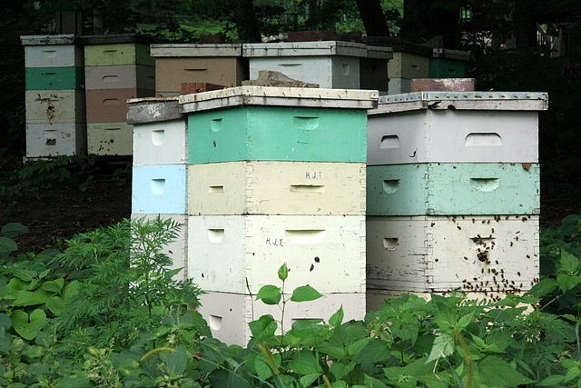 640px-Beehives_in_Mankato,_Minnesota