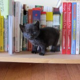 Phoebe on bookshelf