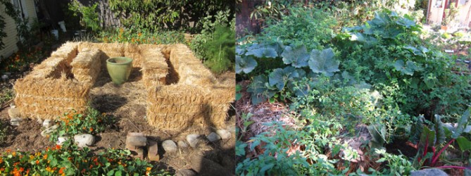 straw bale garden before and after