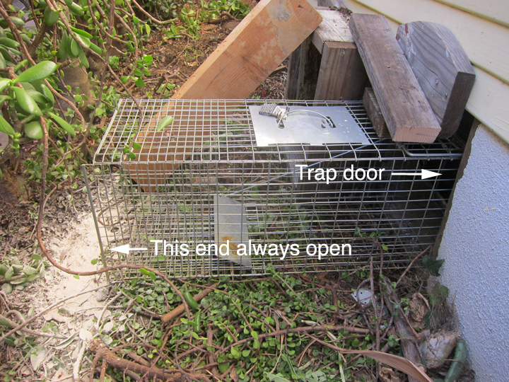 How to Get Skunks Out of Your Basement and Yard | Root Simple