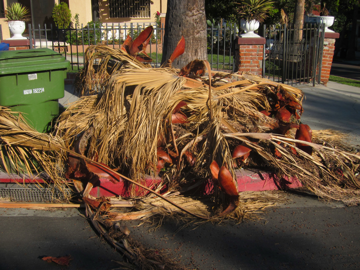 Ten Uses For Palm Fronds Root Simple