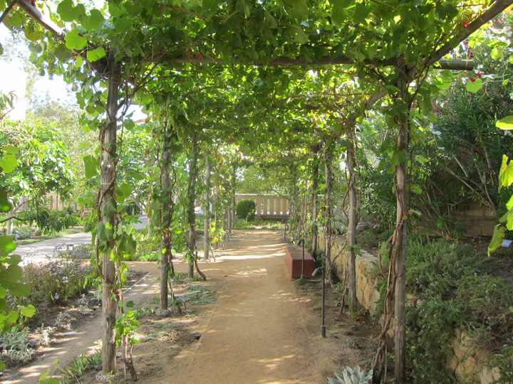 Picture Sundays: A Grape Arbor | Root Simple