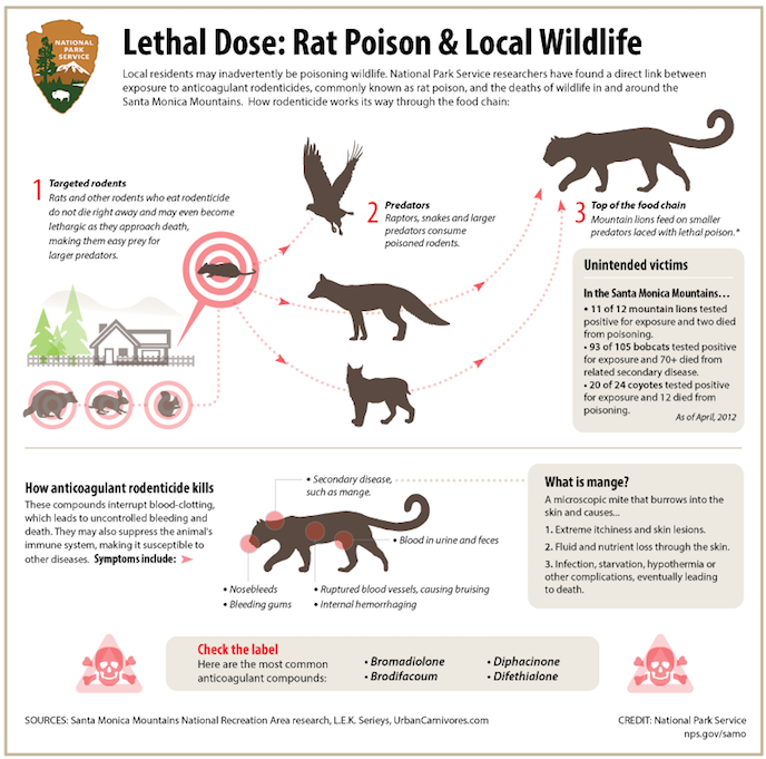 Rat Food Poison In Dogs