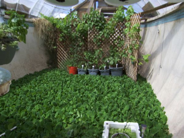 McClungs Swimming Pool Aquaponics Setup