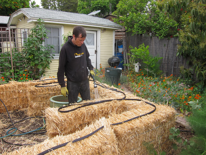 Straw Bale Garden Part Ii Watering The Bales Root Simple