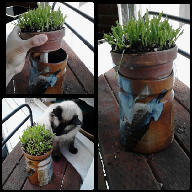 Self Watering Containers Root Simple