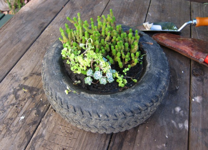 A tire from a children's toy re-purposed by the Organic Mechanics.