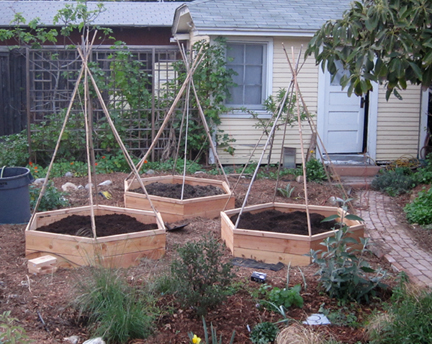 hexagonalbeds Backyard Gardening Blog