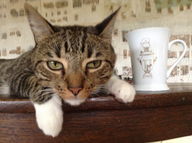 cat and tea cup