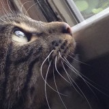 cat looking at window