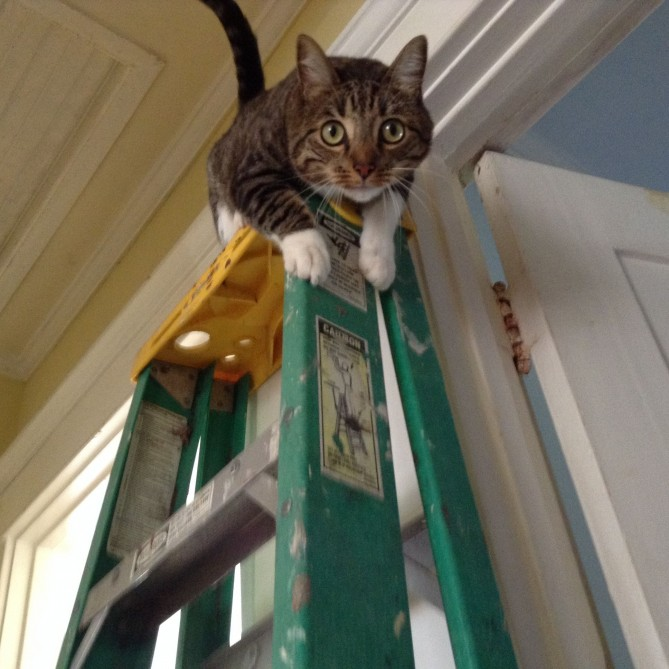 cat on a ladder
