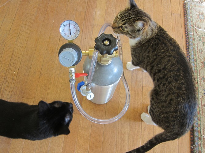 cats inspecting carbonator