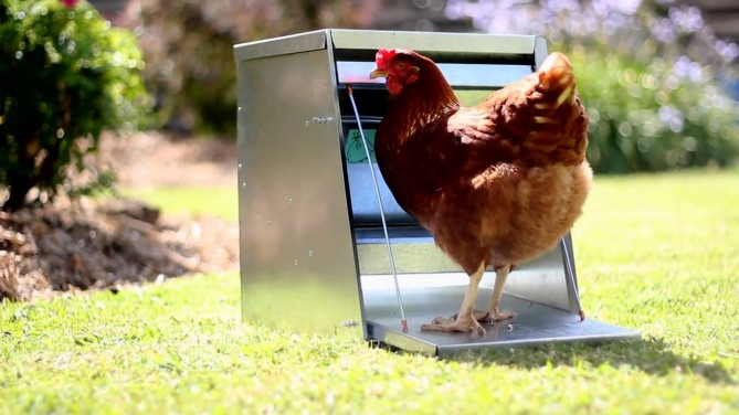 production old rodent of poultry management proof mice the day farms on husbandry chicken one control feeder baby ecology hub environment pest housing rodents