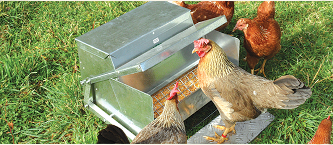 How To Rodent Proof A Chicken Coop Root Simple